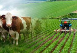 Tarım ve Hayvancılık Yine Revaçta